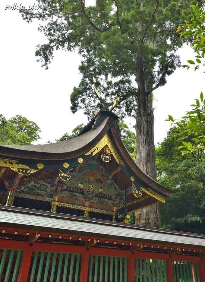 鹿島神宮の巨木・本殿の御神木〜境内で最大の巨木