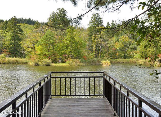 大沼を一周する遊歩道の見所