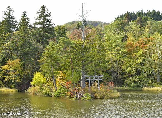 山形県・大沼の浮島~国指定名勝の小島が浮遊する神秘の沼