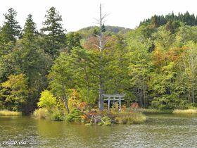 山形県・大沼の浮島~国指定名勝の小島が浮遊する神秘の沼|山形県|トラベルjp<たびねす>