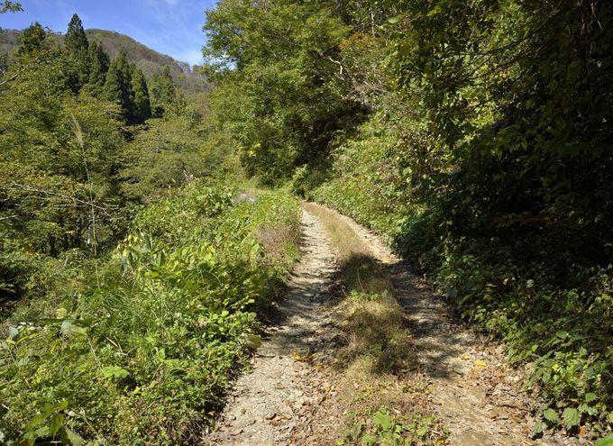 松保の大杉へのアクセス〜林道を経由する2つのルート