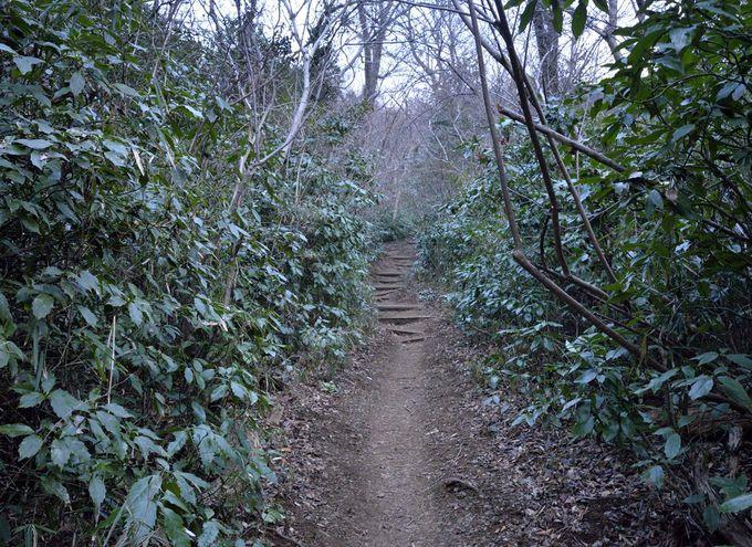 登山道・薬王院コース〜登山口から自然研究路