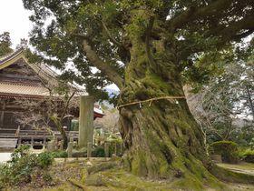 筑波山の名刹・薬王院~巨木茂る境内から目指す山頂|茨城県|トラベルjp<たびねす>