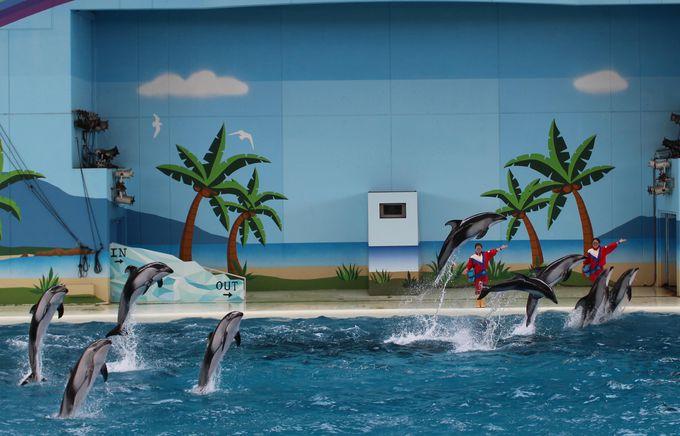 「アクアスタジアム」海の生きものたちのショーは圧巻!