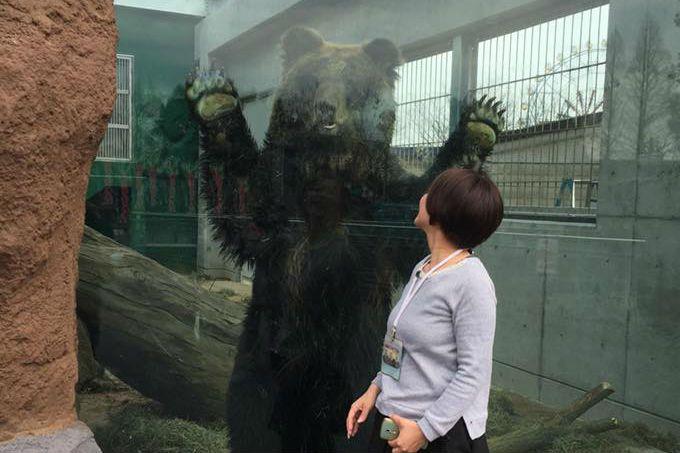 目の前で見るヒグマの大きさにびっくり!