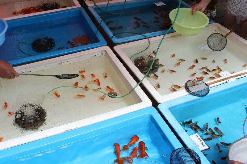 東京の下町に夏を呼ぶ!「江戸川区金魚まつり」の見どころとは?