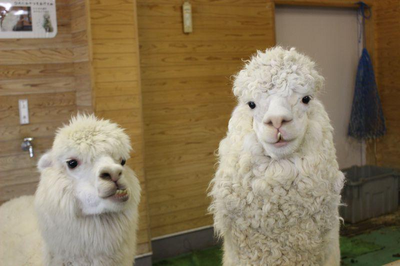 1日たっぷり動物ざんまい!埼玉「東武動物公園」の楽しさは止まらない