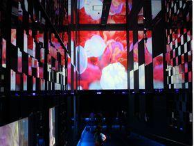 東京「すみだ水族館」が蜷川実花氏と再コラボ!幻想的なクラゲ展示を見に行こう|東京都|トラベルjp<たびねす>