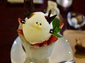 激カワ「にゃんこパフェ」!京都・静けさを楽しむ町家カフェ「ことばのはおと」