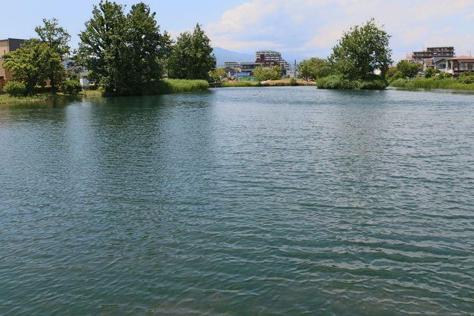 「三島梅花藻」を辿り、源兵衛川の終着地「中郷温水池」へ