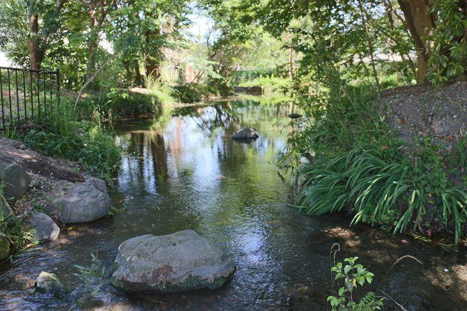 境川・清澄緑地は「朝比奈トンボの里」