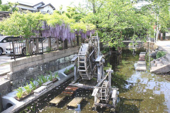 宮さんの川「蓮沼川」沿いを散策
