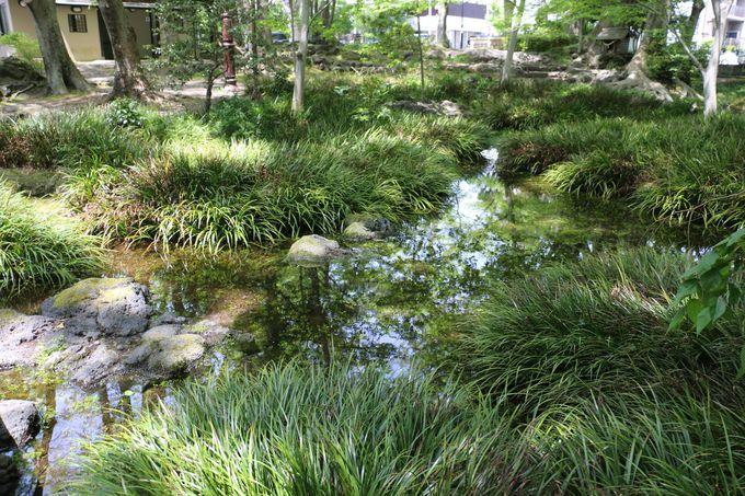 駅近くの自然豊かな水の公園「白滝公園」
