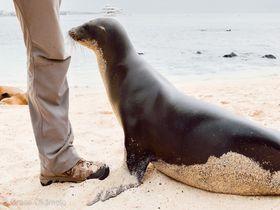 アシカも目前に!動物の楽園ガラパゴス「サン・クリストバル島」