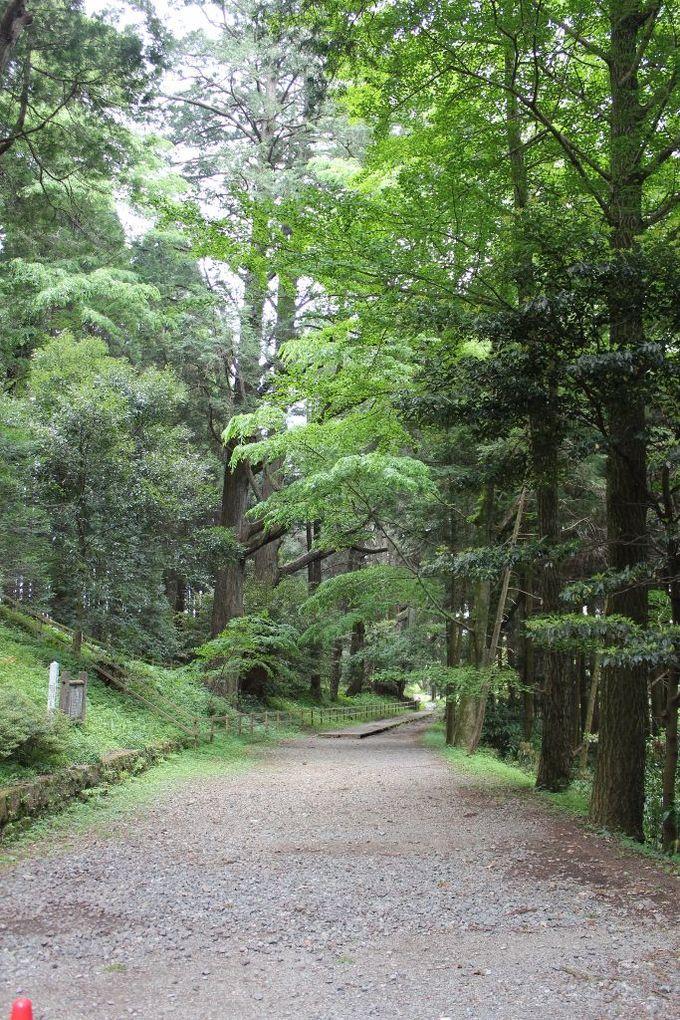 幣立の森から受ける自然のエネルギー