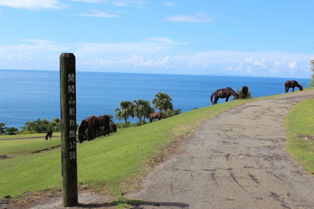 「開聞山麓自然公園」でトカラ馬と出会う