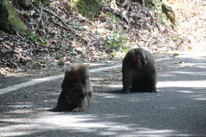 猿や鹿に出会える世界遺産指定地域「西部林道」