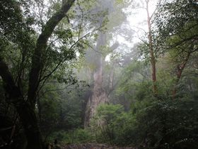 縄文時代へ5時間の旅!屋久島「縄文杉」に会いに行こう|鹿児島県|トラベルjp<たびねす>