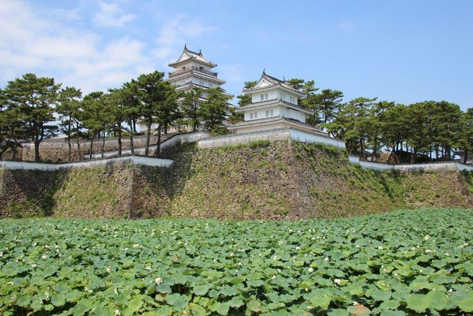 青空にそびえ立つ真っ白な島原城