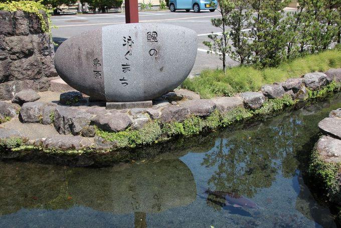 鯉の泳ぐ町 島原
