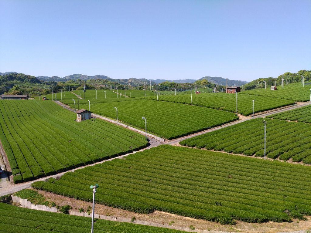 福岡県一の茶どころ八女市「中央大茶園」を観光し町家カフェで一息