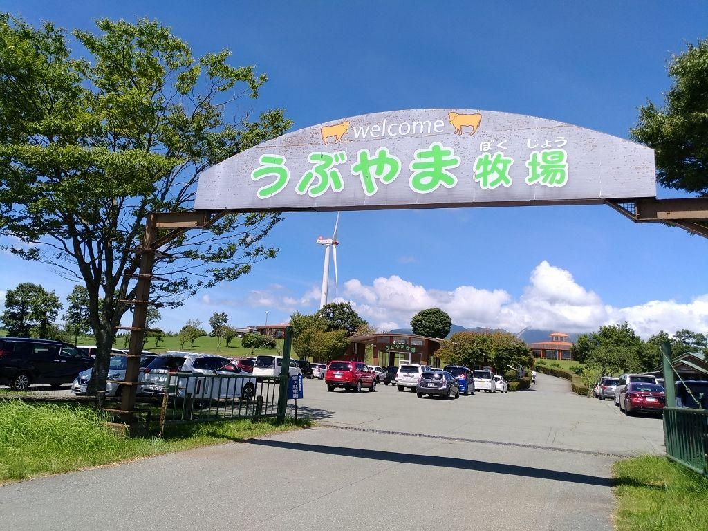 乳搾りやレストランも!阿蘇産山村「うぶやま牧場」