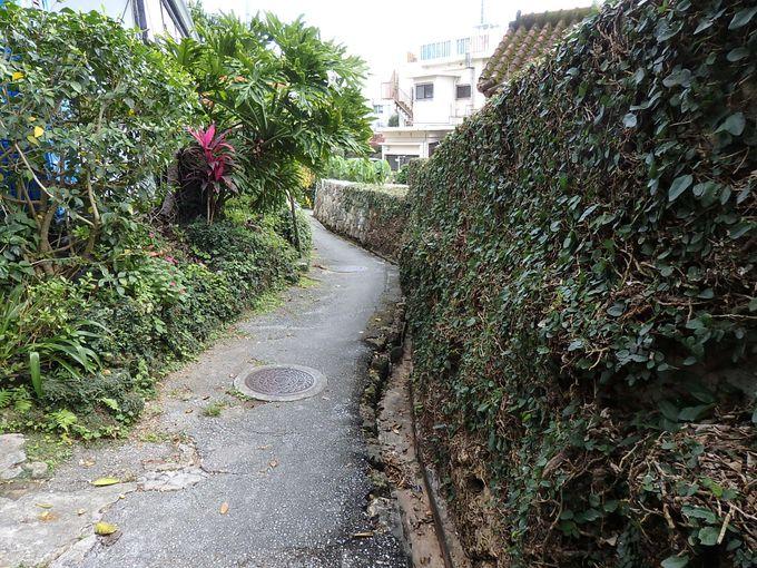 迷い込みたくなる小道を抜けて、散歩は続きます