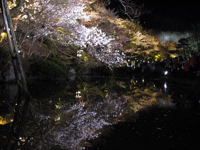 ライトアップされた水に映る逆さ朧な桜も!