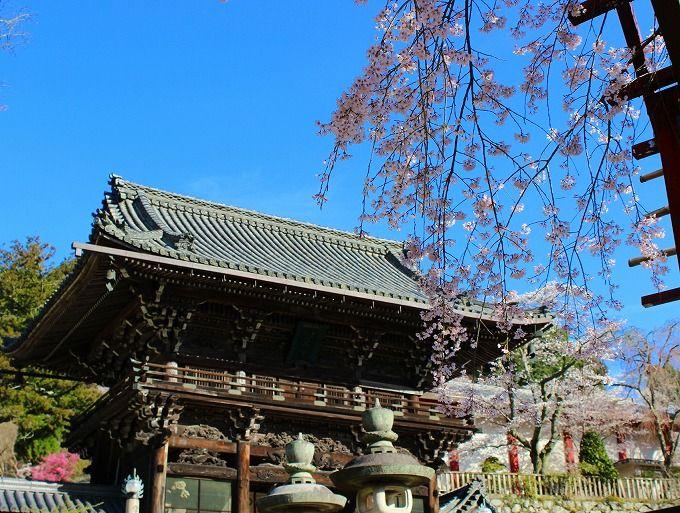 花の御寺は桜も凄い!総本山長谷寺