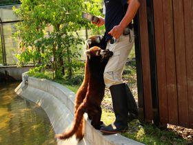 レッサーパンダに超絶メロメロ!「静岡市立 日本平動物園」は動物に近すぎ近づきすぎ!|静岡県|トラベルjp<たびねす>