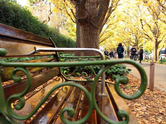 東京を染める紅葉の名所「神宮外苑 銀杏並木」と「六義園」が対照的で美しい!
