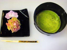 綺麗!かわいい!伝統の和菓子作りが京都の老舗「甘春堂」で体験できちゃう!|京都府|トラベルjp<たびねす>