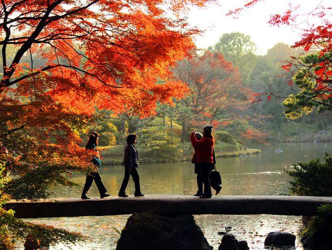 紅葉の六義園は水辺が美しい