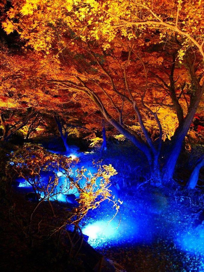 六義園の紅葉はライトアップも見に行こう!