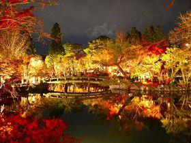 闇に浮かぶ京都の紅葉 一晩で巡るライトアップ3選