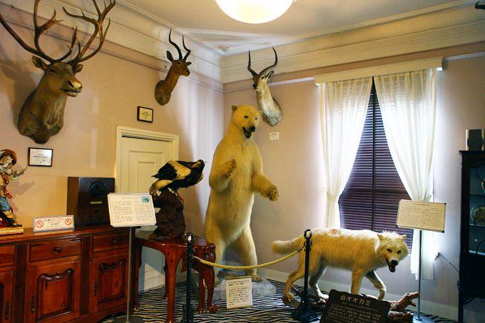 華やかなフランス風異人館「洋館長屋」と珍獣猛獣展示の「ベンの家」