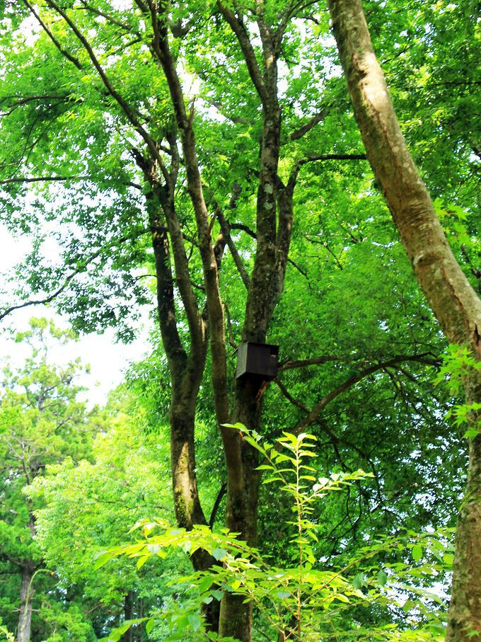 足柄森林公園 丸太の森も楽しもう!