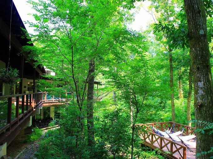 神奈川の隠れ家温泉ならココ!足柄の森に佇む「おんり~ゆ~」