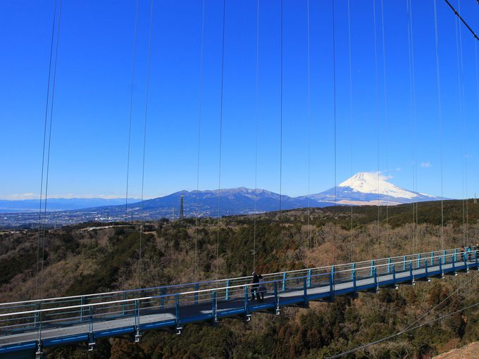 「三島スカイウォーク」は箱根から半日観光も可能!まさに絶景