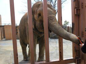 ゾウの餌やりに日本一長いすべり台も!茨城県日立市の子連れスポット3選