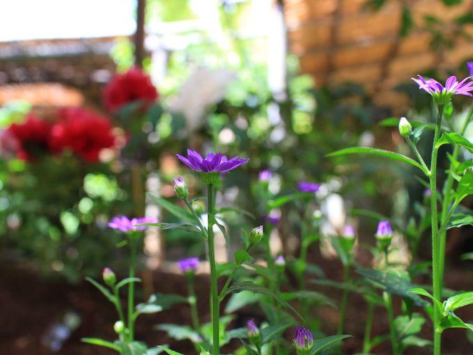 春のぼたん苑で楽しむさまざまな草花