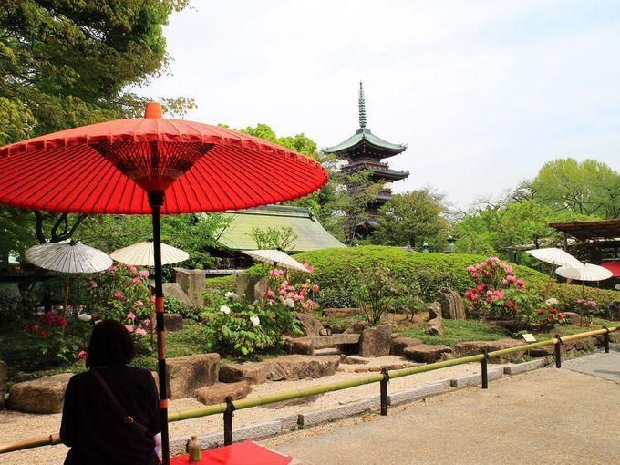 鯉のぼりや日本庭園とぼたんの花のコラボ