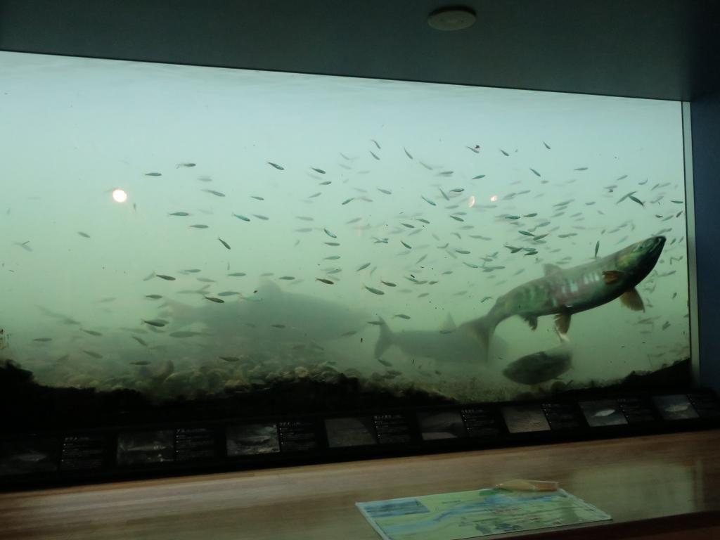 ガラス越しに川の中の様子を見学出来る??