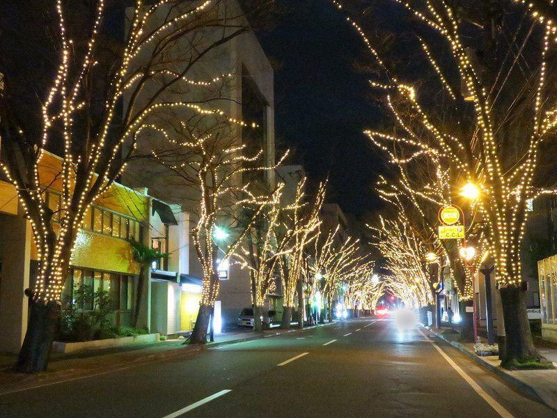 寒空に広がるあたたかなイルミネーション!新潟駅南けやき通り