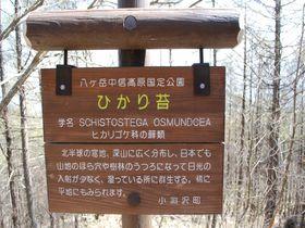 山梨・八ヶ岳の絶景スポット観音平で『ひかり苔』が見られる!!