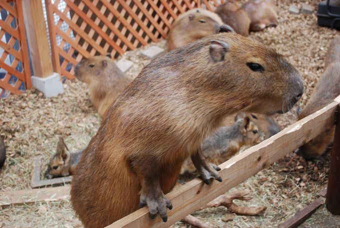 季節限定の「ふれあい体験」で普段触れない動物たちと触れ合おう!