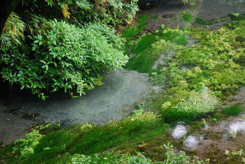 静岡県『柿田川湧水』で生命の源・水のパワーで運気UP!