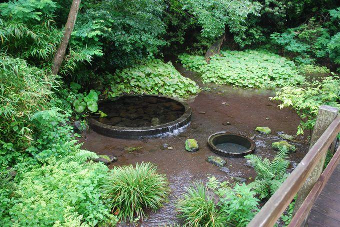 21世紀に残したい日本の自然百選に選ばれた公園。