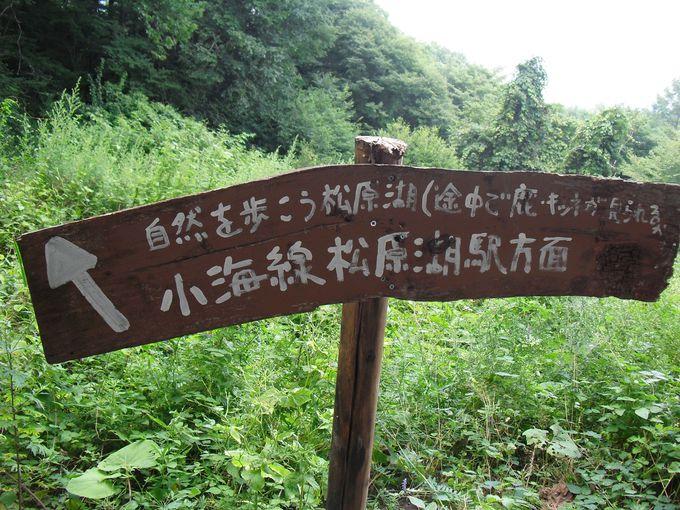 自然豊かな森の中でバッタリと会ってしまうかもしれない「アレ」