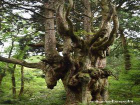 日本海の秘境・隠岐の島の絶景&パワースポット巡りの旅|島根県|トラベルjp<たびねす>